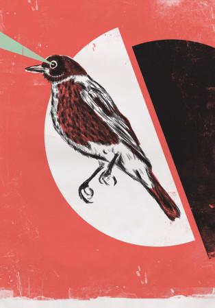 ציפור חודרנית 1