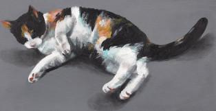 חתולי